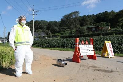 疫情延燒!韓國2野豬驗出非洲豬瘟 江原道首次出現病例
