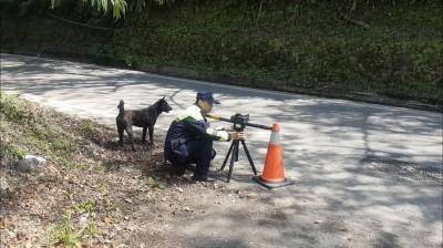 台中市海拔最高機動測速照相 小黑犬「壯壯」執勤呆萌!