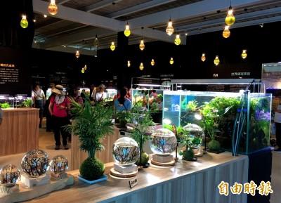 上千隻水晶蝦、活海膽!桃園農博「魚の新世界」 遊客驚艷