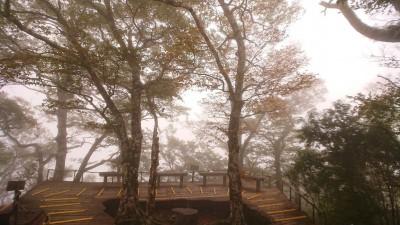 秋季限定!山毛櫸換新衣 太平山變「金色森林」