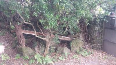 歷史悠久的草山行館梁柱遭竊 竊賊稱:要修繕自家