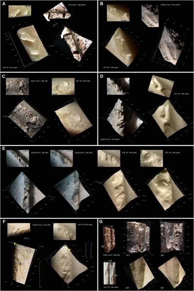 世界最古老剩菜 竟可追溯至20至40萬年前