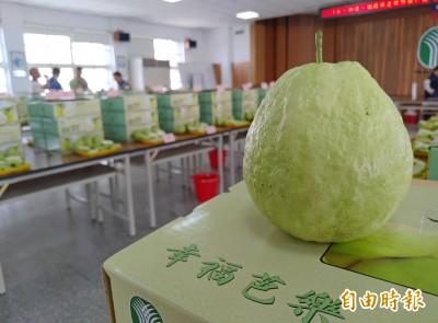 綠委大嗑芭樂挺農民 諷韓國瑜MOU只達7%要加油