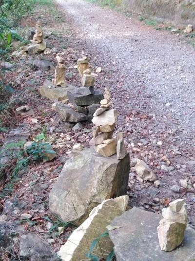 外星人所為? 惠蓀林場林道旁出現密集石陣