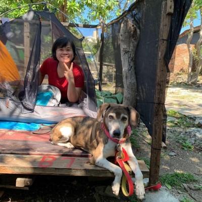 搜救犬退休去哪了? 內政部揭露近3年除役後下落