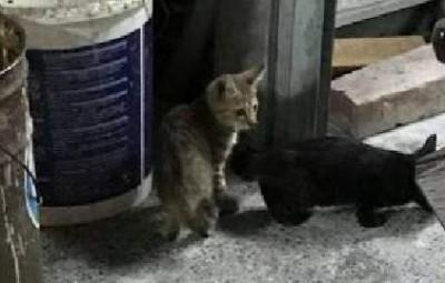 被控重摔幼貓爆頭 知名店家道歉:反射動作