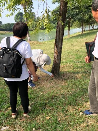 民眾自發移除衛武營樹木白蟻 養工處:會加強巡檢