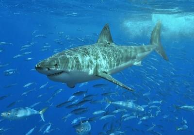 海底驚魂! 澳洲度假勝地傳鯊吻事件