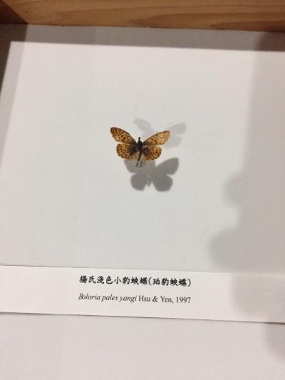 她們曾經來過地球 3滅絕蝴蝶「再現蹤」