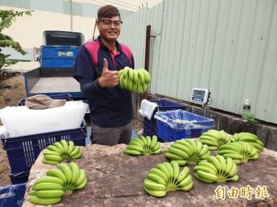 軍職退伍種香蕉 返鄉青農香檬、紅豆也種得呱呱叫