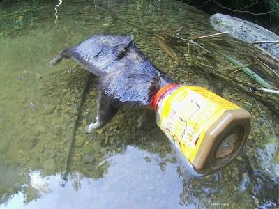 別再亂丟垃圾!想吃塑膠罐殘存芝麻醬 鼬獾窒息而亡