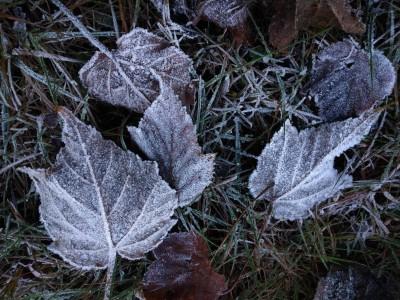 冷吱吱! 玉山塔塔加清晨下探5度 公路現雪白冰霜