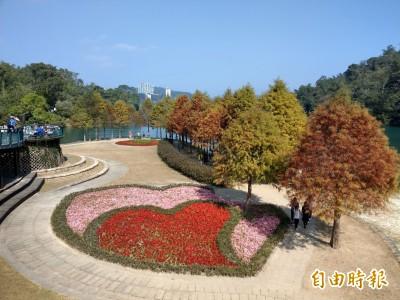季節限定美景! 日月潭黃金楓、落羽松驚豔
