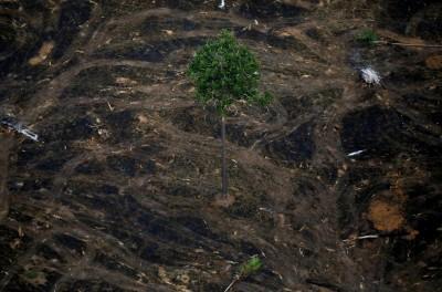 巴西官方數據:亞馬遜雨林砍伐面積飆至10年新高