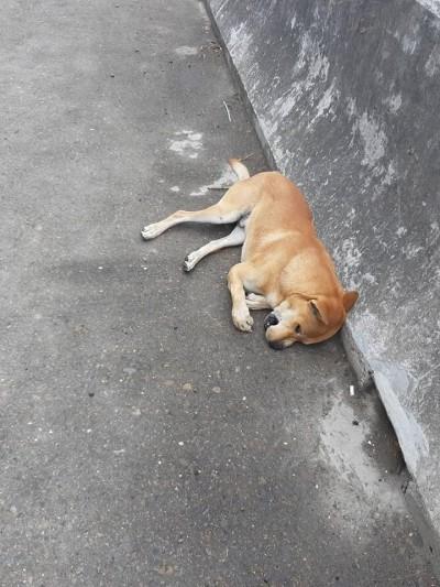 嚇!天外飛來一隻狗  小轎車慘遭毀容