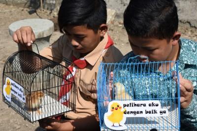 印尼鼓勵孩童養雞 改善電子成癮現象