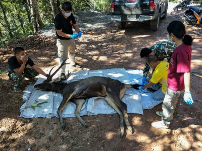 泰國野鹿陳屍國家公園 胃裡挖出7公斤塑膠垃圾