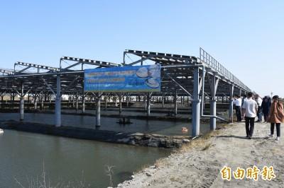 「漁電雙贏」邁大步 台西漁電共生試驗育成基地啟用