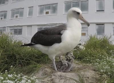 真的是老鳥!全球最老鳥兒已68歲 還在下蛋養育後代