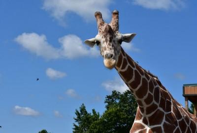 動物園大火!斑馬、長頸鹿四處逃竄 10隻動物喪生
