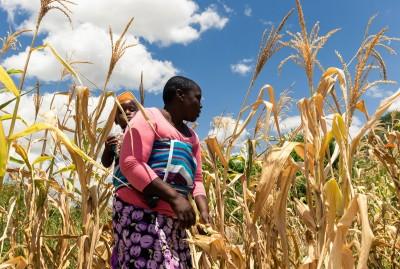 昔日非洲糧倉辛巴威陷「人為飢荒」 聯合國調查:60%人口糧食短缺