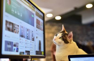 韓國貓咪愛「縱火」?  首爾貓奴們3年發生62起火災