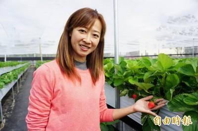 我青農我驕傲!許彤蓉棄高科技業種草莓 獲百大青農肯定