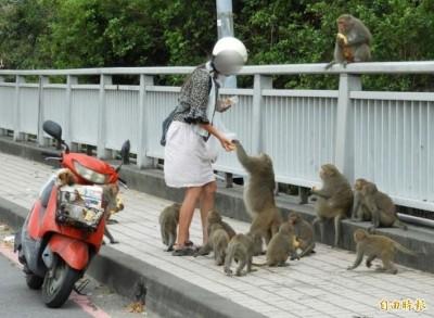 陽管處發漆彈槍給居民驅猴 環團︰應教導別餵食