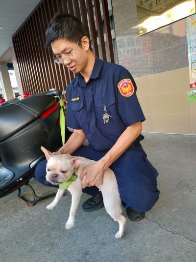 法鬥犬「麻古」誤闖警局 幸運再遇女主