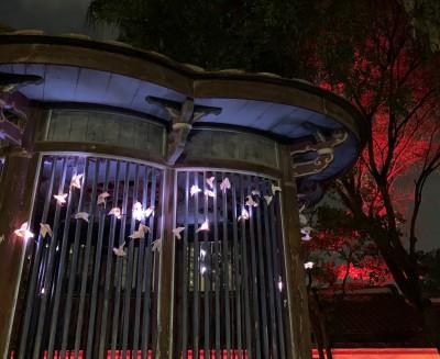 板橋林家花園光雕秀!加碼推出「光鳥聚福」美呆了