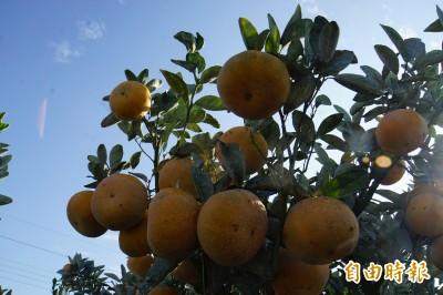 貨出去!雲林縣農產品將外銷馬來西亞