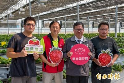 觀音草莓農場 紐約大學碩士、交大博士聯手打造