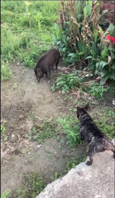 遛狗遇到「不速之客」!他拍下寵物犬的對峙過程  網友驚嘆