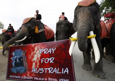 泰國大象沉默遊行 為澳洲野火受災動物祈福