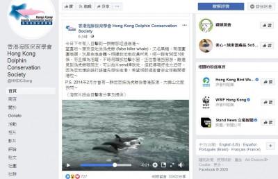 迷路?罕見百條偽虎鯨現身維港 香港市民開心拍照