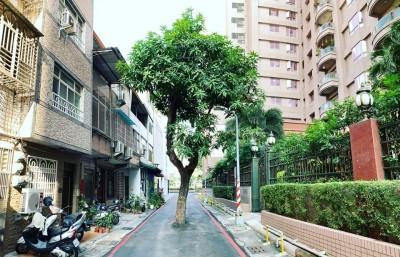 最狂路霸!高雄巷道中央這棵芒果樹 移除太貴沒人碰