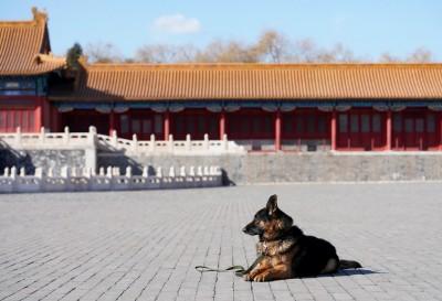 武漢肺炎》香港確診增至6例 47歲男子曾在武漢被狗咬