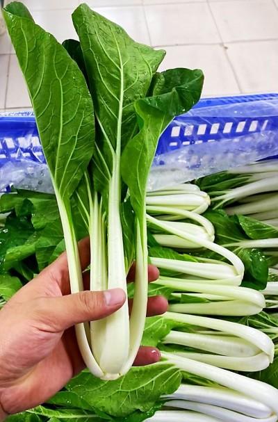 防疫延後開學 營養午餐蔬菜塞車 果菜公司揪團購