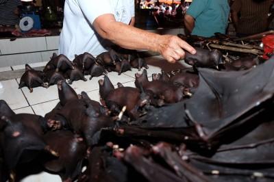 武漢肺炎》不甩政府要求 印尼野味市場照賣蝙蝠、老鼠、蛇
