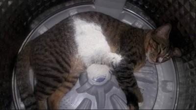 洗衣撒粉掀開後發現GG了...網笑:快給罐罐賠罪