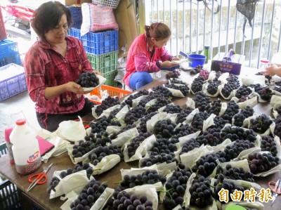信義「農」實力創新高!農產運銷破4億、存款逾37億