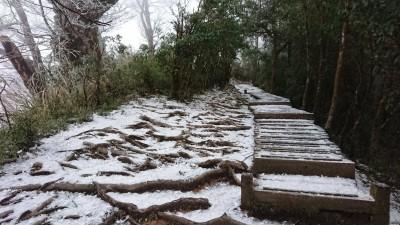 太平山零下2度c 山毛櫸步道深夜飄雪