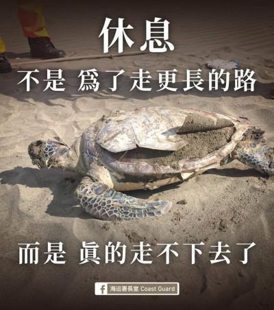 大自然悲歌!全台1天9起海龜死亡 慘烈畫面令人鼻酸