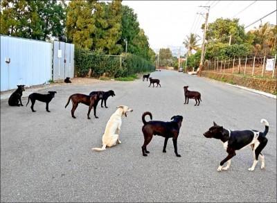 武漢肺炎》香港首例 一確診者家犬檢驗呈弱陽性