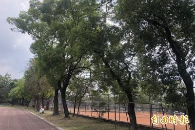 民眾憂斷老樹頭鋪太陽能板 內埔國小:修剪非砍除
