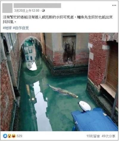 謠言終結站》威尼斯河道驚現鱷魚?查核中心打臉