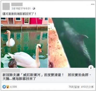 謠言終結站》威尼斯河道驚現海豚?查核中心打臉