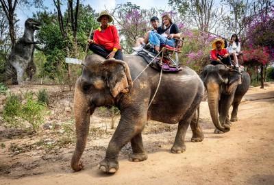 武漢肺炎》疫情衝擊旅遊  泰國2000大象「失業」恐餓死