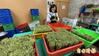 疫情衝擊找出路 台南將軍蘆筍搶攻宅經濟