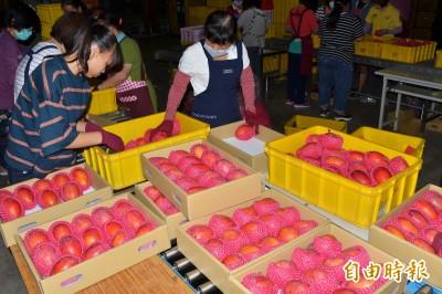 獨家》史上首次!日、韓授權台灣檢疫 芒果、玉荷包接力衝鋒